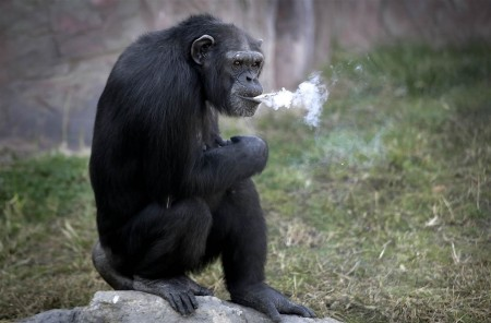 161019-world-northkorea-smoking-chimp-exhale-0909_eda8221ce94a44038a48a1bfaee373da-nbcnews-ux-2880-1000